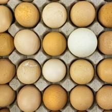Co oznaczają symbole na jajkach